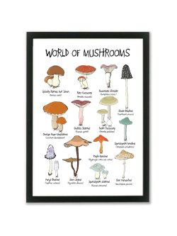 World of Mushrooms