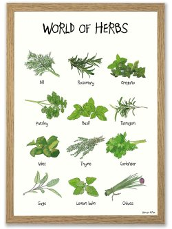 World of Herbs 50 x 70 plakat